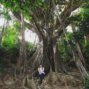 Chụp ảnh cùng cây đa ngàn năm